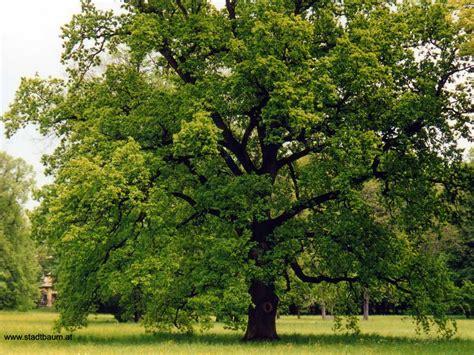 Im Garten Wuchs Der Baum by Garten Landschaftsbau