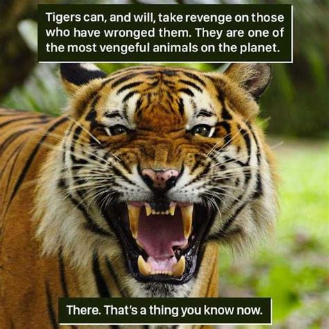 A dump of facts from weird nature on Facebook Animals
