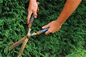 Quand Tailler Les Arbustes De Haies : tailler vos haies gamm vert ~ Dode.kayakingforconservation.com Idées de Décoration