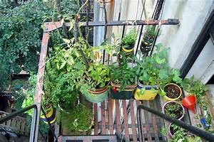 Urban Organic Gardener Grows a Lush Vegetable Garden on