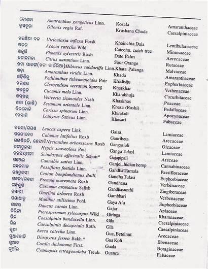 Names Botanical Alphabetical Odisha Plants Common Alphabetically