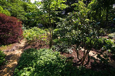 Cafe Botanischer Garten München öffnungszeiten by Schattenpflanzen Stiftung Bremer Rhododendronpark