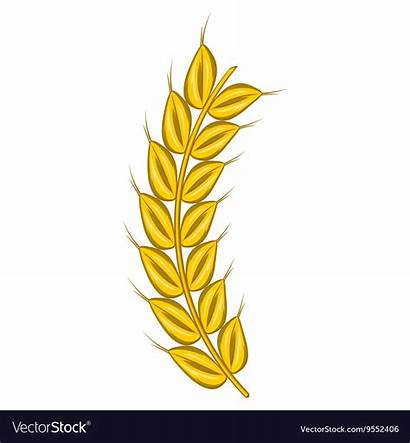 Barley Cartoon Stalk Icon Vector Ripe Royalty