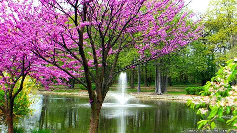 Free Spring Wallpapers For Desktop Hddesktopwallpaperorg