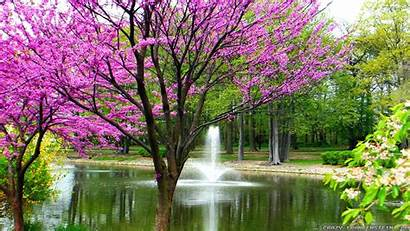 Spring Tree Daffodils Wallpapersafari