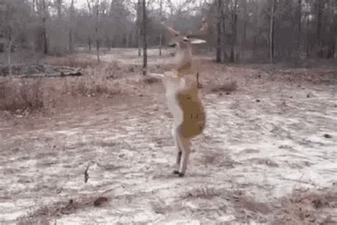 deer dancing gifs tenor