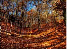 Autumn Woods Autumn Weddings Pics