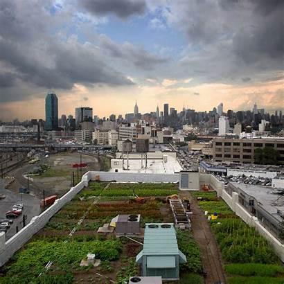 Urban Farming Rooftop York Garden Agriculture Gardens