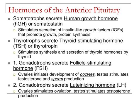 Ppt Chapter 18 The Endocrine System Powerpoint