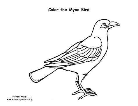 myna bird coloring page