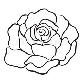 rose  drawing    clipartmag