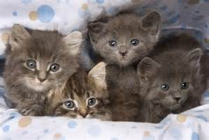 cat a lot a lot of kittens cats picture