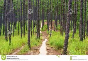 Beautiful Vietnam Landscape, Dalat Pine Jungle Stock Image ...