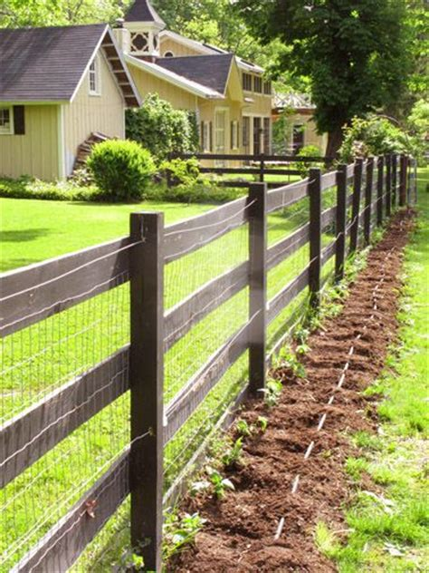 Planted A Long Row Of Tomatoes Along A Fence Is An Instant