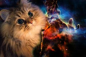 Free Space Cat Wallpapers High Quality « Long Wallpapers
