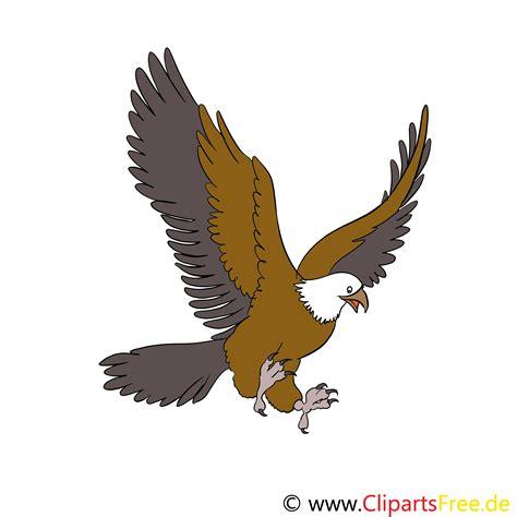 adler cartoon bild illustration clip art