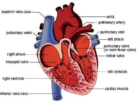 protect  heart  himalayan times