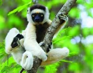 Animals That Endangered