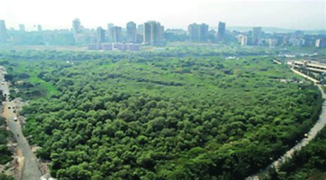 forest cover  state raised   sq km   yrs