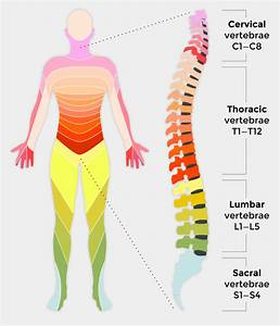 Injury To The Spinal Cord Obstructs Nerve Impulses Leading