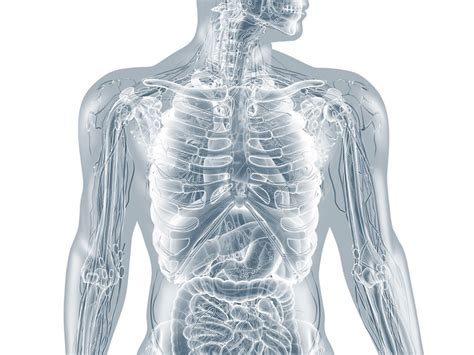 menschliches gehirn anatomische  illustrationen und