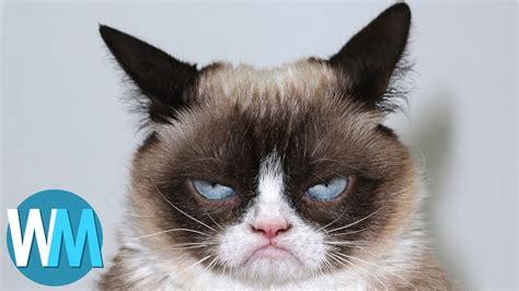 top  adorable animals   viral sensations youtube