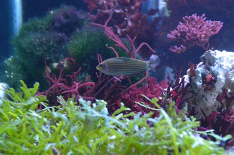 My Macro Lagoon Page 2 Reef Central Online Community