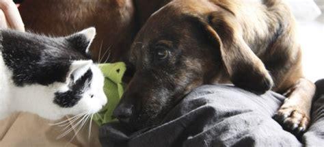 waschbär und katze hund und katze aneinander gew 246 hnen 187 ratgeber katzen beiden tieren pfotenteam