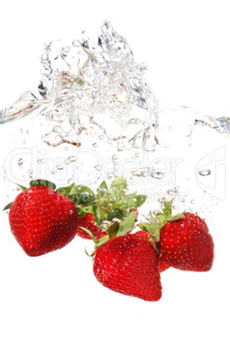 mückenlarven im wasser abtöten erdbeere im wasser 10 lizenzfreie bilder und fotos