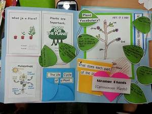 Plant Lapbook I Like The Leaves With Important Points