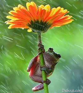 下雨啦,萌萌的小伙伴也打起伞来了!-大搜集网