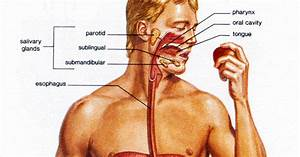 Articles  The Effects Of Alcohol On The Human Body