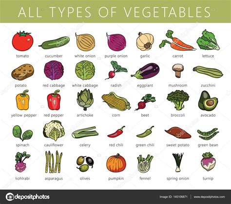 Types Of Vegetables — Stock Vector © Lazuingmailcom
