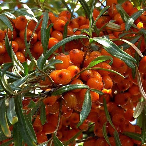 Beeren Im Herbst by Essen Aus Der Natur Beeren Sammeln Im Herbst