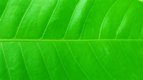 Abstract Green Leaf Wallpaper by Leaf 4k Ultra Hd Wallpaper And Background Image