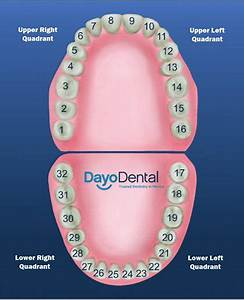 20 Best Dental Images On Pinterest