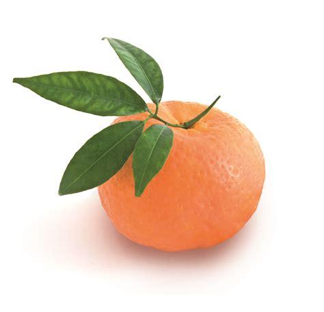 composer bureau bureau de presse agroalimentaire mandarine 2
