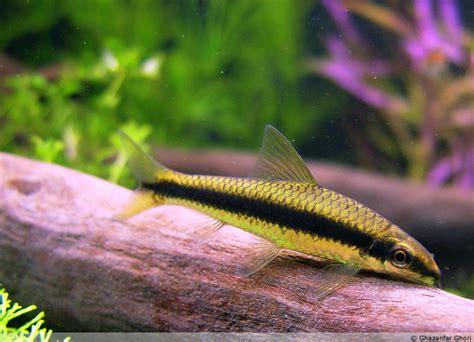 aquaticscapecom