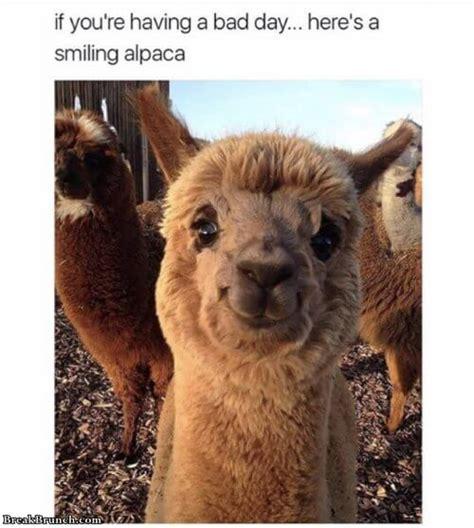 funny animal memes breakbrunch