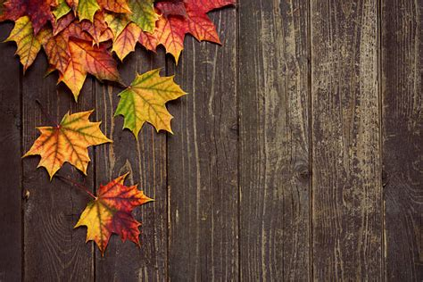 Fall Backgrounds Powerpoint by Fall Leaves Pictures Images And Stock Photos Istock