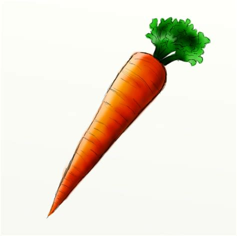 pictures of pictures of carrots clipart best