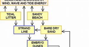 A Level Geography Ideas  Sand Dune Succession Case Study