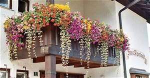 Balkonpflanzen Sonnig Pflegeleicht : videos pflegeleichte balkonpflanzen ~ Frokenaadalensverden.com Haus und Dekorationen