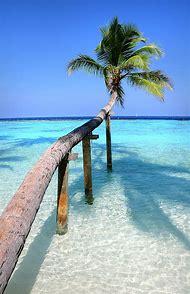 Beach Palm Trees Maldives