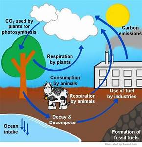 Carbon Cycle Explanation Step By Step  The Citric Acid