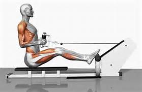 row bent over barbell ...