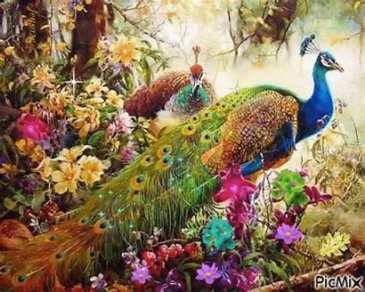 Peacock Heaven Picmix Peacocks Flowers Painting Bird
