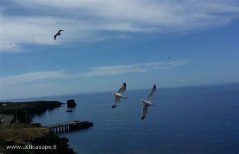 Gabbiano Sul Mare - gabbiano sul mare