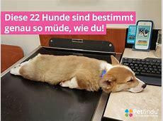 Diese 22 Hunde sind bestimmt genau so müde, wie du