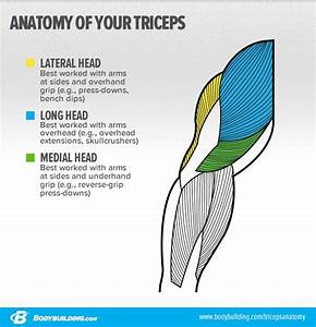 6 Strategies To Target Your Triceps Lateral Head And Build